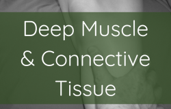 deep muscle and connective tissue